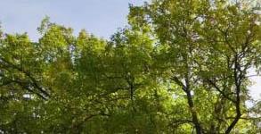 Heizen mit Holz: Pellet-Heizung
