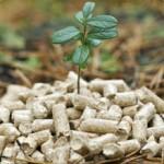 Holzpellets für Pelletheizung - nachwachsender Rohstoff